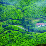 Kerala Honeymoon Special (With Tree House)